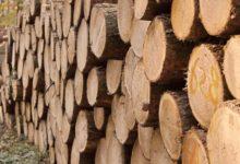 Photo of Umfangreiche Forstarbeiten