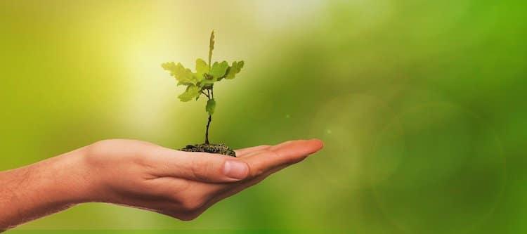 2020-03-27-Baumpflanzungsaktion
