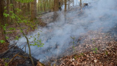 Photo of Waldbrand auf über 100 Quadratmetern oberhalb der Becke