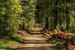 2020-04-17-Waldbrandgefahr