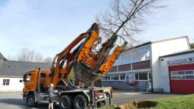 Photo of Linde zieht nach Hilchenbach um – Großbaumverpflanzung