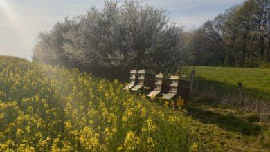 Photo of Diebe stehlen vier Bienen-Völker – Zeugen gesucht!
