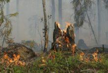Photo of Größerer Wald-Brand konnte verhindert werden