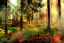 Photo of Hitzewelle sorgt für erhöhte Waldbrandgefahr
