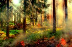 2020-04-27-Waldbrandgefahr-Hitzewelle