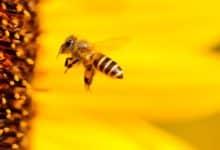 Photo of Bienenvölker gestohlen – Hinweise erwünscht!