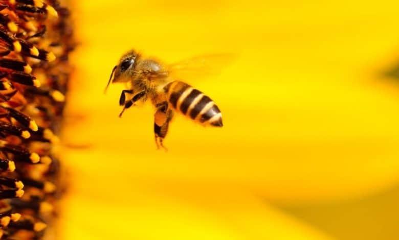 2020-05-04-Bienen-Bienenvoelker