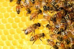 2020-05-04-Bienenvoelker