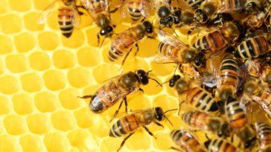 Photo of Erneuter Diebstahl von Bienenvölker – Hinweise erwünscht!