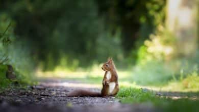 Photo of Vorsicht Wild – Bereits 30 Wildunfälle im Märkischen Kreis