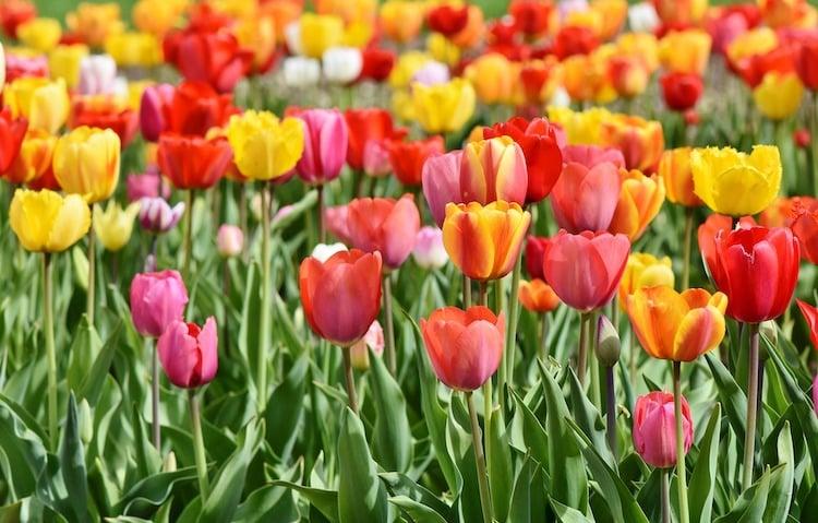 Photo of Tulpen suchen ein Zuhause – Sauerlandpark