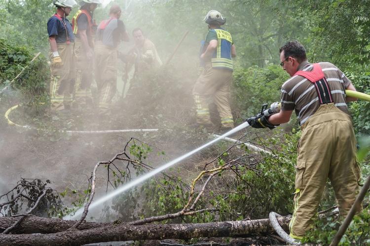Photo of Feuerwehreinsatz: Bodenfeuer in einem Waldstück