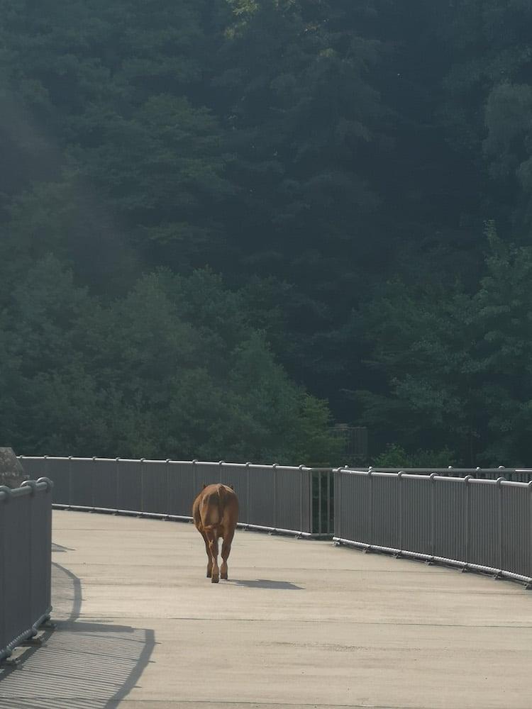 Photo of Jungbulle spaziert an der Landstraße entlang