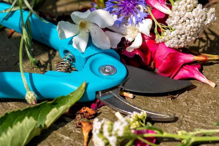 Photo of Mit Gartenschere Blumen aus fremden Gärten geschnitten