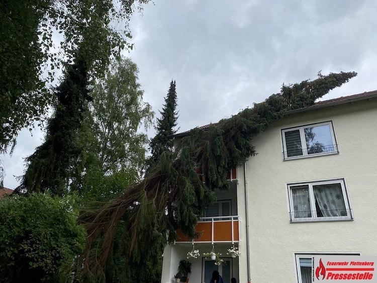 Photo of Fichte fiel auf Mehrfamilienhaus in der Berliner Straße
