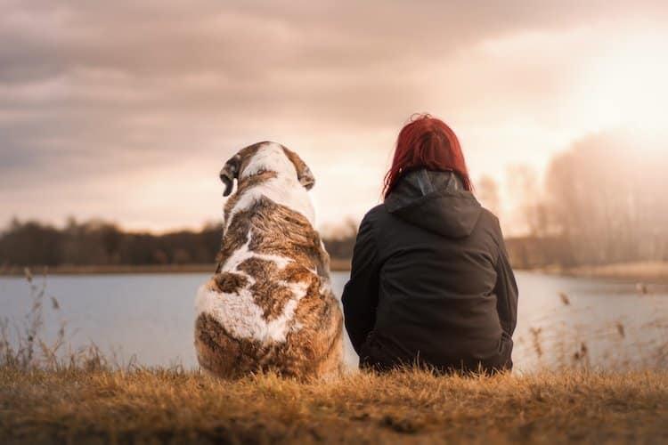 Photo of Was Sie vor dem Kauf eines Hundes beachten sollten