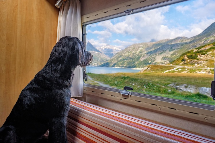 Photo of Urlaub mit dem Hund – so funktionierts