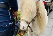 2021-03-22-Pony