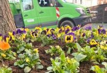 2021-03-25-Blumen